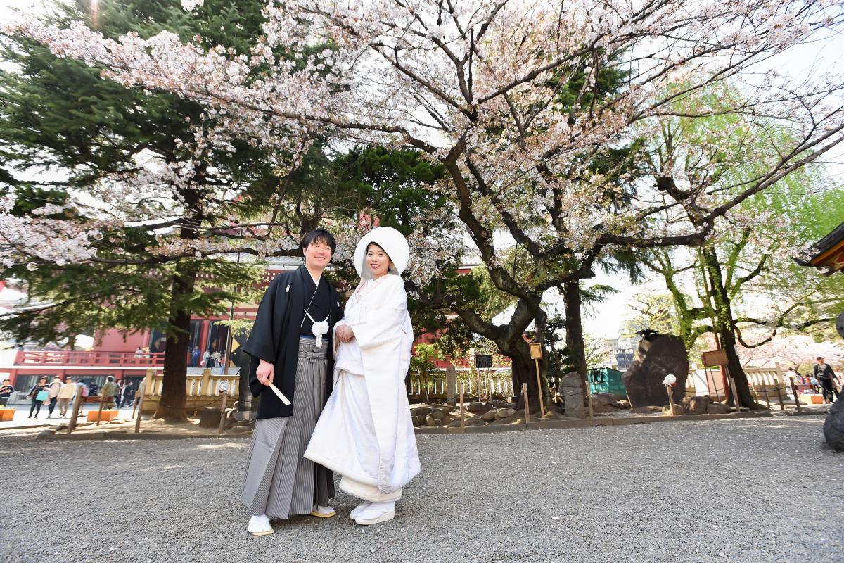 桜の季節の浅草神社、桜をバックに記念写真を